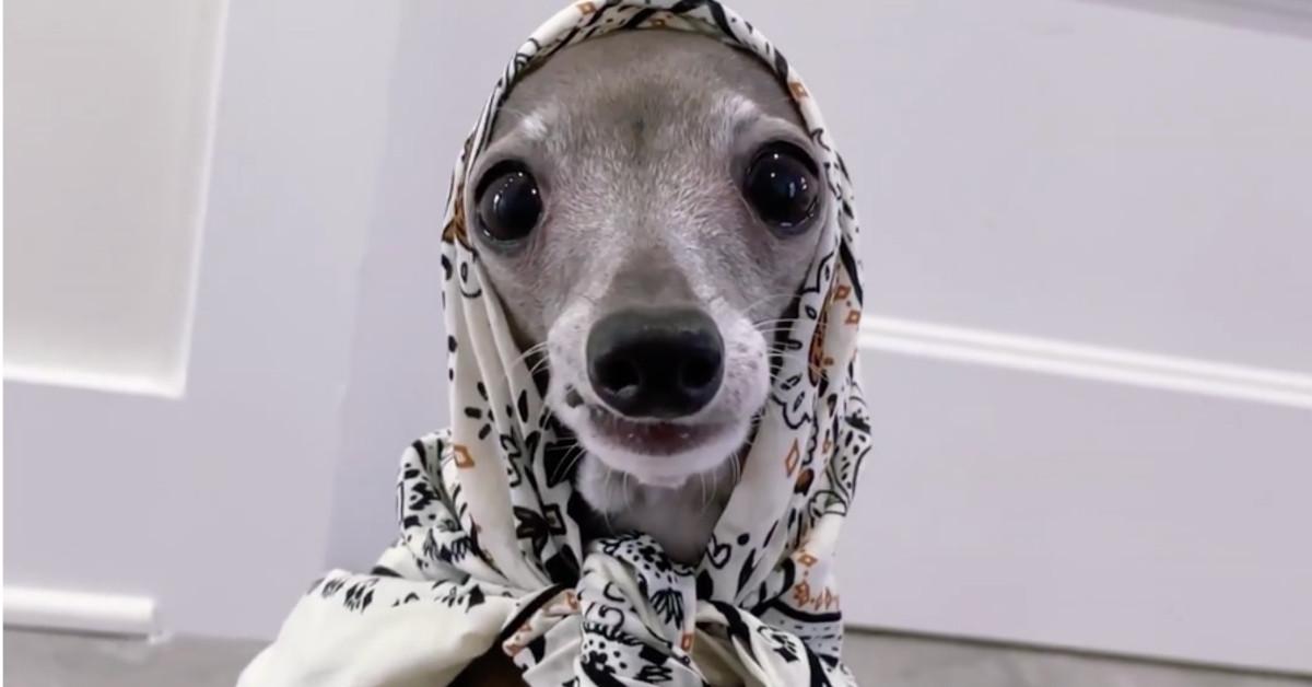 La galga 'influencer' Tika the Iggy hace de modelo para Zara y Fendi presenta bolsos-transportín para perros: el 'boom' de las mascotas llega a la moda
