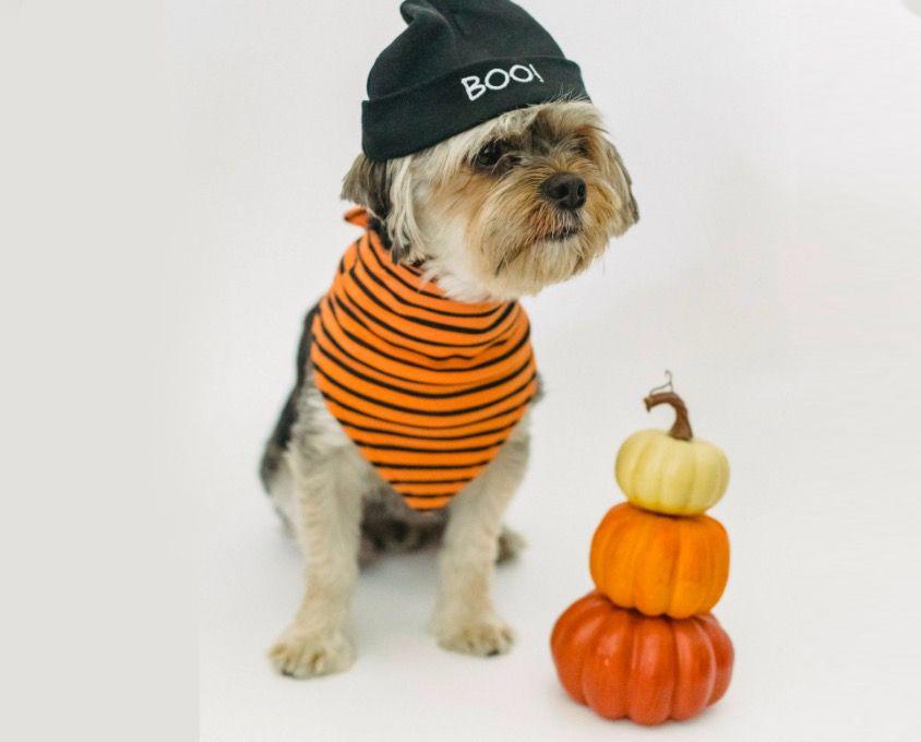 50 disfraces originales para perros por Halloween